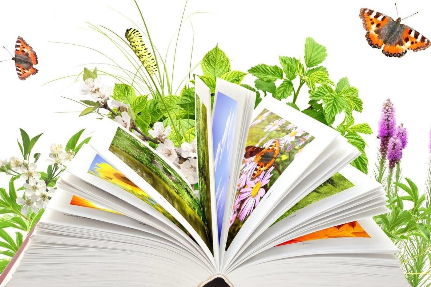 Otwarta książka. Za nią rośliny i motyle