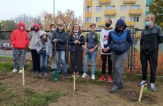 Więcej o: Nowe drzewka i krzewy